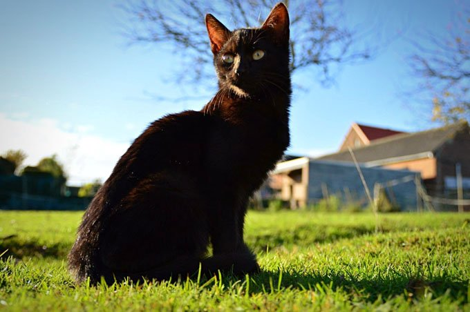 Pretty black kitty.