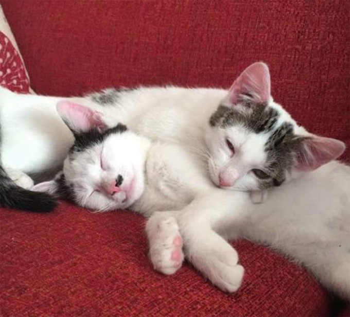 Cuddle Up Time!