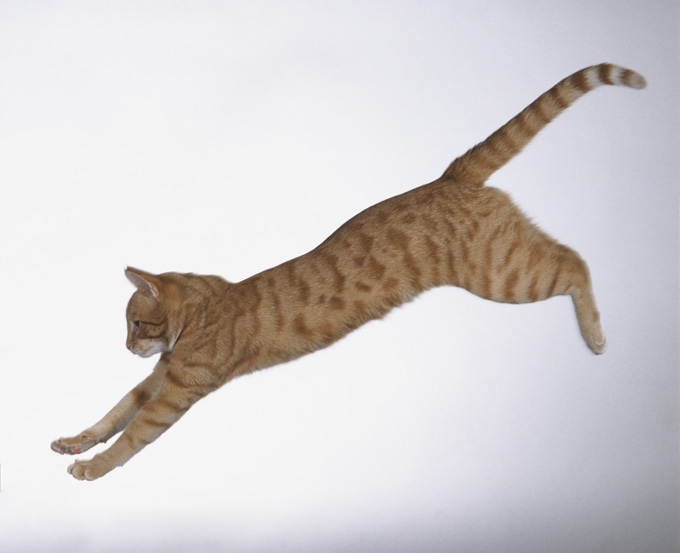 Amazing Cats In Flight Pictures