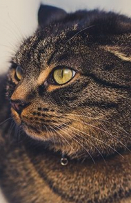 Cat Ears Can Tell You How Cats Are Feeling