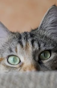 Cats Have Better Hearing Than Humans & Dogs