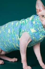 Hairless Cats Get Cold