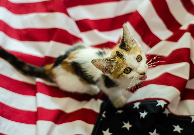 Can I Have A Patriotic Treat Yet? For America?
