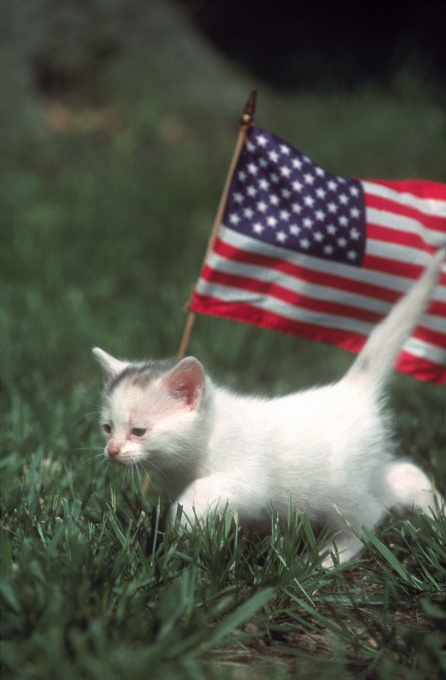 The Tiniest American