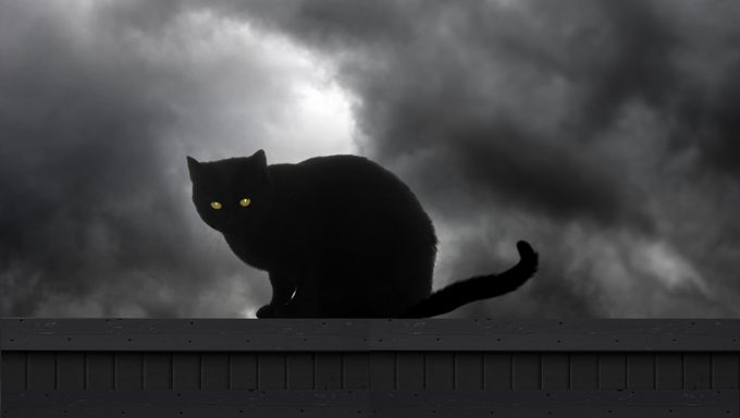 Black Cats Face More Danger On And Around Halloween