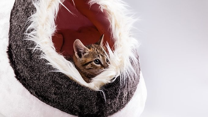 Get The Most Luxurious Cat Bed Ever