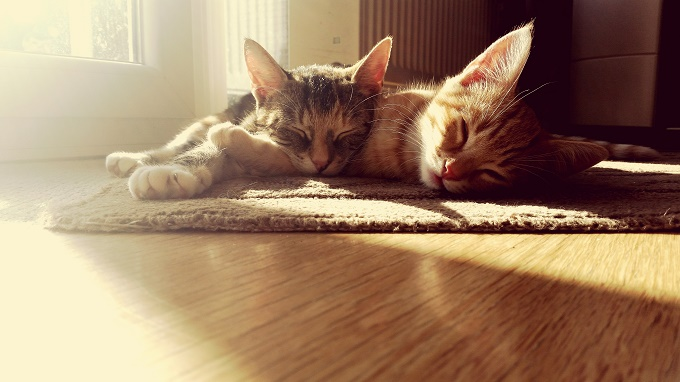 Find the sunny spot.