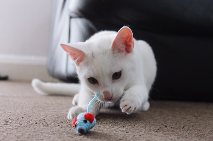 Get more toys.