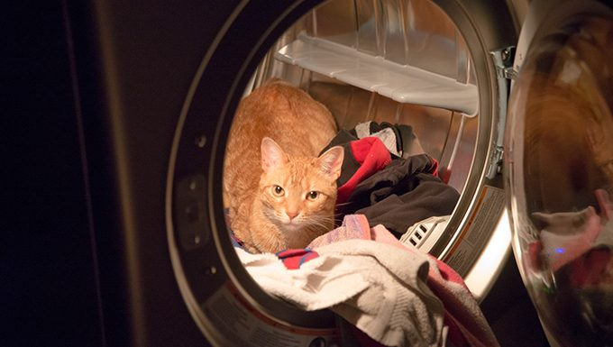Incidents With The Dryer