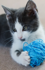 Cats With Yarn, String, Or Dangerous Toys