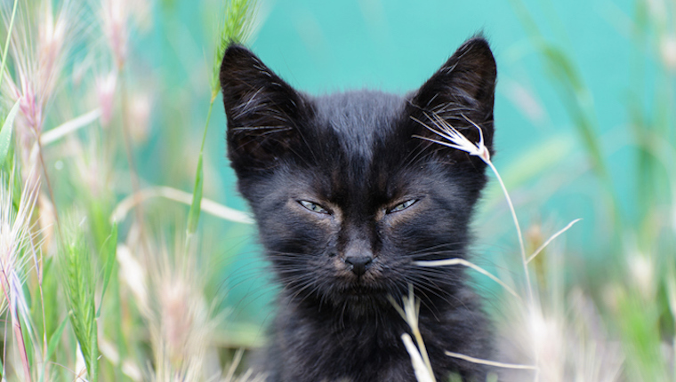 Black Cats Are Not Bad Luck