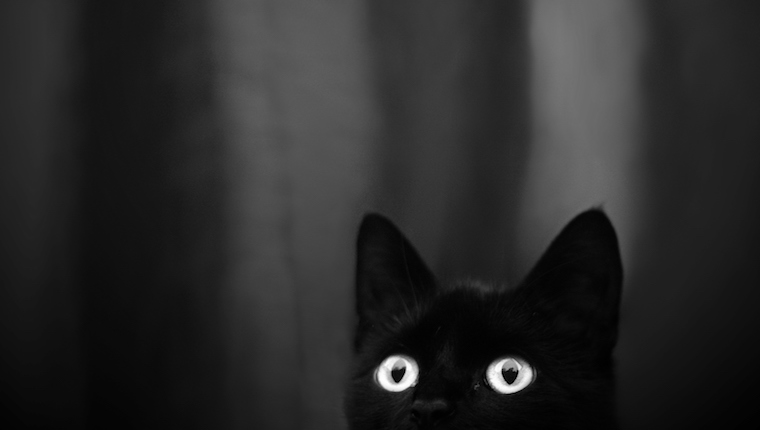 Black Cats Photograph Great!