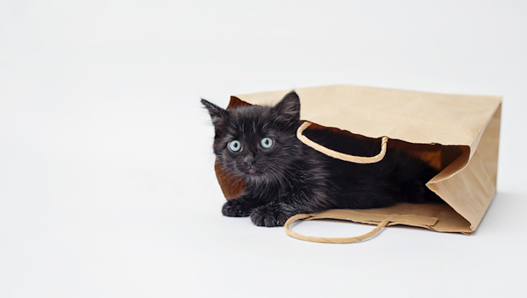 Black Cats Are Always Available