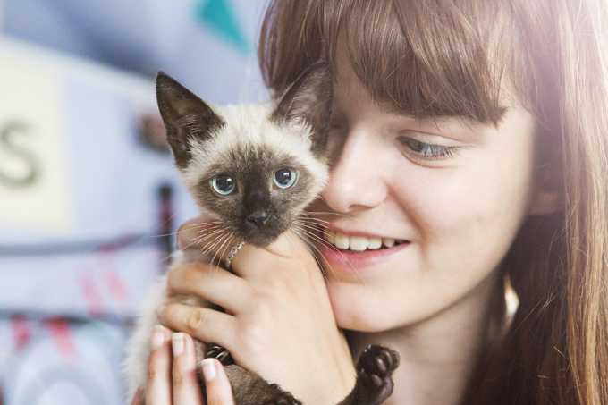 Siamese Cats Breed Pictures