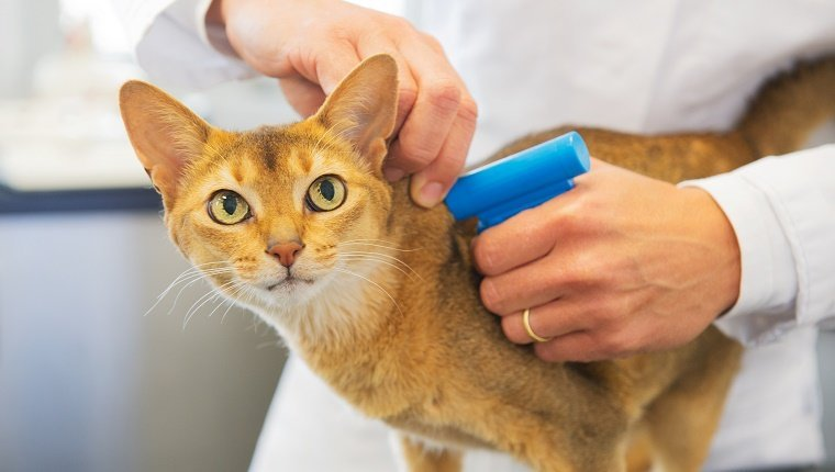 Get Your Cat Microchipped