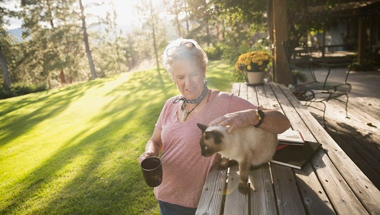 Cats can get sunburned, so protect them