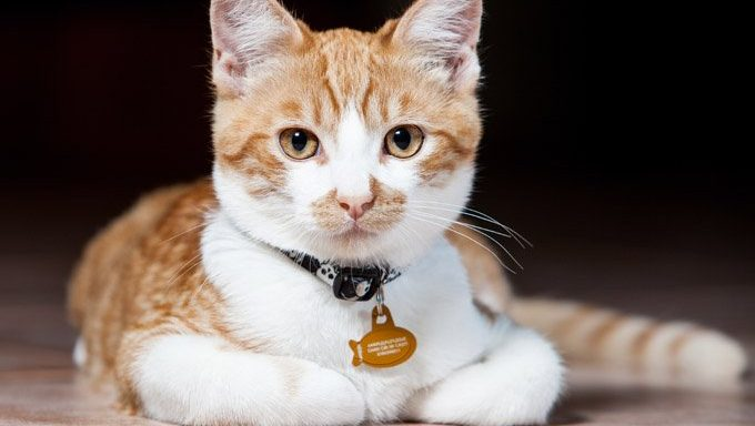 Keep Collars On And Make Sure Microchip Info Is Up-To-Date