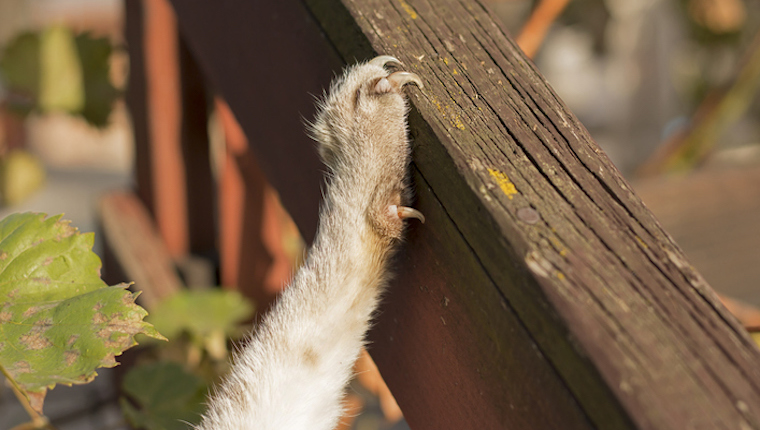 Know When To Trim Your Cat's Nails