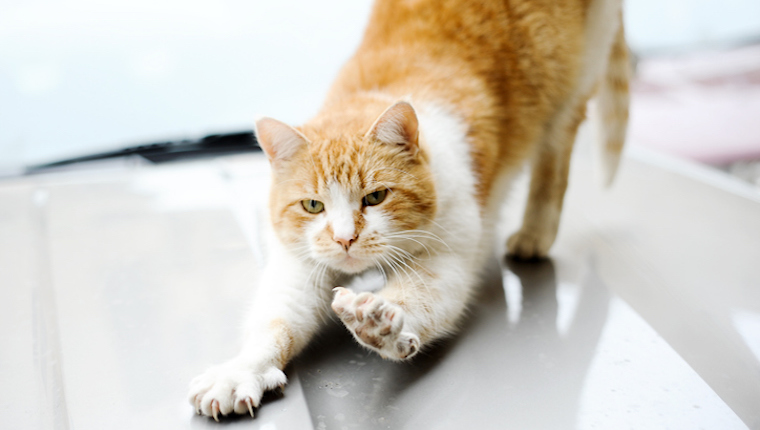 Start Slowly To Reduce Your Cat's Anxiety