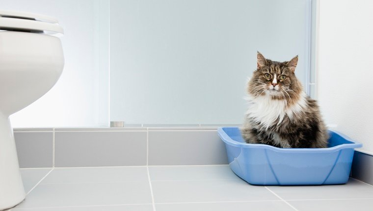 Well-Used Litter Box