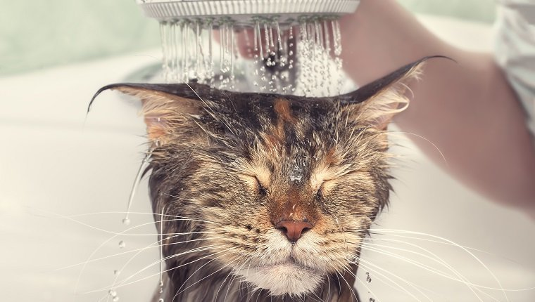 Clean Your Cat