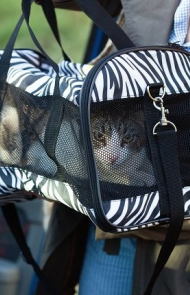 Keep Your Cat In A Carrier