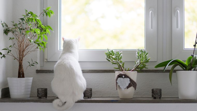 Keep Your Cat Indoors